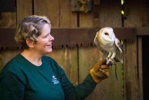 Keeper cares for owl